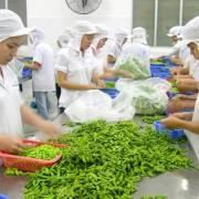 Xuất khẩu rau quả hướng tới mục tiêu đạt kim ngạch 4,2 tỷ USD