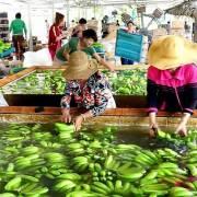 Nông sản sang EU có mức 'nhạy cảm số 1' về phòng vệ thương mại