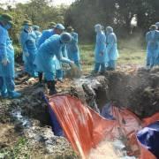 Gần 23.500 con lợn bị tiêu huỷ và mắc bệnh dịch trong hơn một tháng