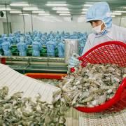 Thị trường Trung Quốc, mênh mông mà không dễ vào