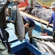 5.400 tấn cá không xuất khẩu được vì một thông tư