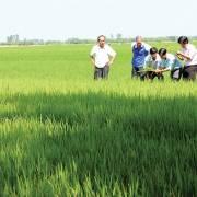 Nông nghiệp thuận thiên cần thủ lĩnh và đất, nước sạch