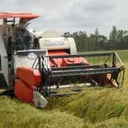 Giá lúa tươi thương phẩm ở Trà Vinh tăng trở lại