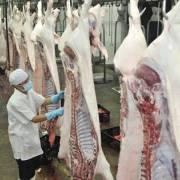 Khẩn cấp tích trữ thịt heo sạch cấp đông
