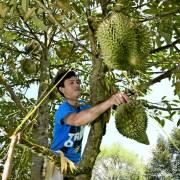JD chi gần 1 tỷ USD mua trái cây Thái Lan