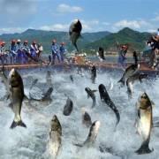 Xuất khẩu cá tra, basa sang thị trường ASEAN tăng trưởng tốt