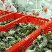 ASEAN – thị trường xuất khẩu tiềm năng của tôm Việt Nam