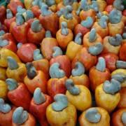 Ấn Độ và Việt Nam cạnh tranh quyết liệt trên thị trường xuất khẩu hạt điều