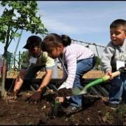 Chuyện đời thường: Nhật ký trồng cây