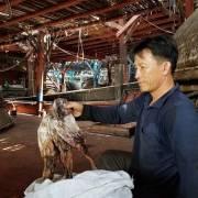 'Ế' gần 1.000 tấn mực do thương lái Trung Quốc thay đổi cách thu mua