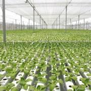Úc cũng phải học Israel làm nông nghiệp công nghệ cao