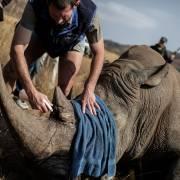 BV Nhi đồng 2 cấp cứu kịp thời bé 22 tháng tuổi ngộ độc bột sừng tê giác