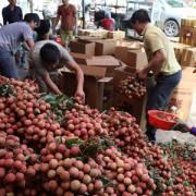 Vụ vải thiều năm nay Bắc Giang thu gần 6.400 tỷ nhờ giá cao kỷ lục