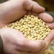 Trung Quốc bắt đầu tăng cường nhập khẩu hàng nông sản Mỹ