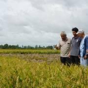 Khi nhà nông thích ứng với biến đổi khí hậu