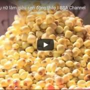 [Video] Làm giàu sen Đồng Tháp