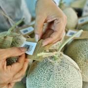 Nông sản Việt chịu áp lực cạnh tranh rất lớn ngay trên sân nhà