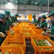EU bắt đầu kiểm tra chặt chẽ nông sản Việt Nam từ 1/9