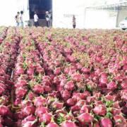 Nông sản lại ùn ứ ở cửa khẩu sang Trung Quốc