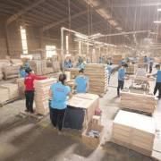 Dự án FDI vào ngành chế biến gỗ tăng mạnh: nhận diện 'doanh nghiệp lạ'
