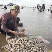 Thêm 3 loại thủy sản Việt Nam được xuất vào Trung Quốc