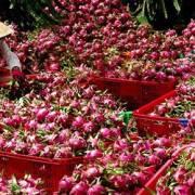 Vào chuỗi giá trị toàn cầu là lối thoát cho nông sản Việt