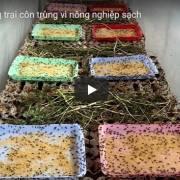 [Video] Trang trại côn trùng ở Cái Răng – Cần Thơ