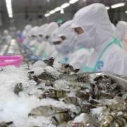Hơn 600 doanh nghiệp được phép xuất khẩu thuỷ sản sang Đài Loan