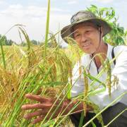 Giống lúa cho từng vùng và cho từng phân khúc