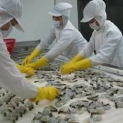 Xuất khẩu tôm sang Đài Loan tăng trưởng ổn định