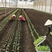 Sản xuất nông nghiệp hữu cơ: thiếu và yếu