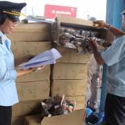Hải quan Cát Lái khởi tố 3 vụ án hình sự liên quan buôn lậu, giả mạo xuất xứ
