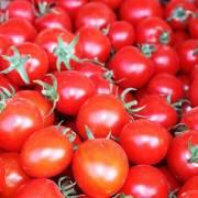 Khoảng lặng: Cà chua không đất