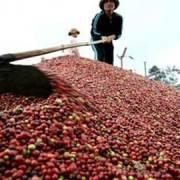 Cà phê tìm lối đi mới ở thị trường nội địa