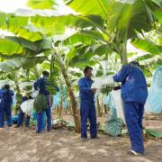 Nông nghiệp xuất siêu 10,4 tỷ USD