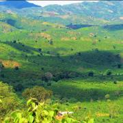 Những ngày xuân hoang vu của Nguyễn Đức Sơn