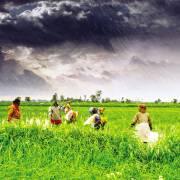 Trò chuyện với chuyên gia Hoa Kỳ về nông nghiệp Ấn Độ