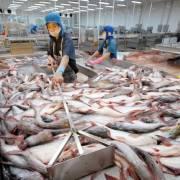 'Đòn kép' đánh vào tham vọng của thủy sản Minh Phú