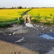 Khuyến cáo giảm 50.000ha đất lúa có nguy cơ bị hạn mặn ở ĐBSCL