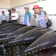Đức, Ý tăng nhập khẩu cá ngừ từ Việt Nam do nhu cầu cao mùa dịch
