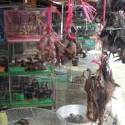 Thủ tướng đồng ý 'cấm mua bán, tiêu thụ động vật hoang dã'