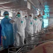 Bộ trưởng Nguyễn Xuân Cường sẽ yêu cầu 17 tập đoàn giảm giá thịt heo