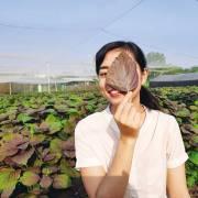 Ngày 8/3: Kể chuyện ba cô gái say mê mùi hương thiên nhiên Việt