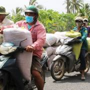 ĐBSCL: Nông dân khó bán lúa vì kênh mương khô cạn