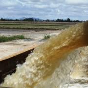 Sau hạn, mặn làm sao hồi sinh đất đai suy kiệt?