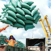 Lập đoàn kiểm tra thực tế lượng gạo xuất khẩu