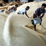 Giá gạo Ấn Độ tăng cao sau khi khôi phục hoạt động xuất khẩu