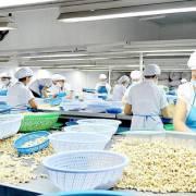 Thủ phủ chế biến điều vừa đói vốn, vừa thiếu nguyên liệu