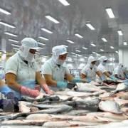Cổ phiếu thủy sản đi lên nhờ kỳ vọng mới từ EVFTA