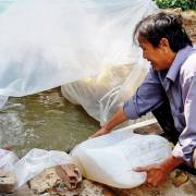 ĐBSCL: Mặn duy trì mức cao trong tháng 4
